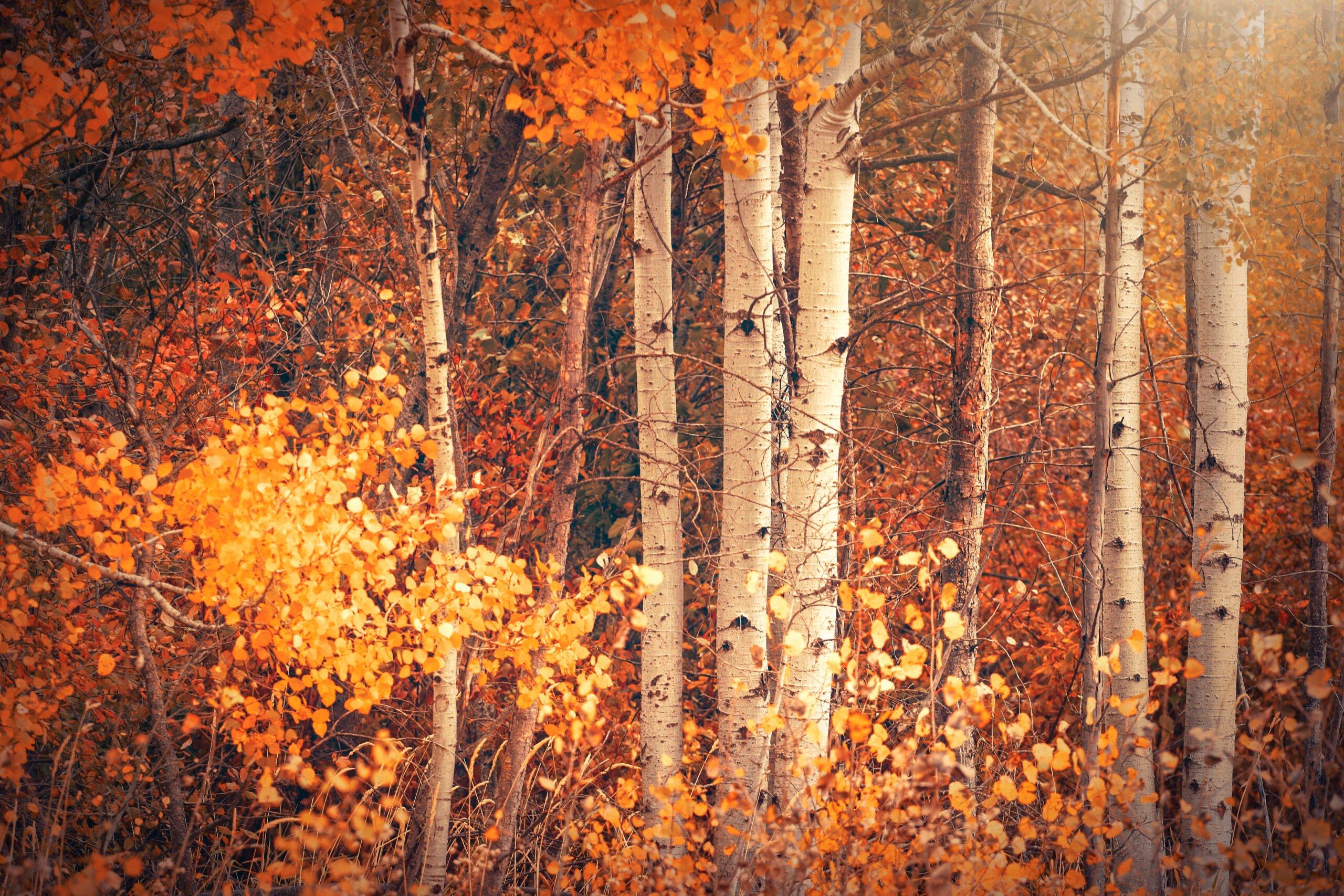 Fall in Deer Park